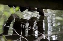 Embarcadero, pies y reflejo