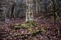 Musgo en las raíces