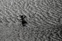 Cormorán en el río Segura