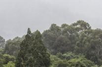 Gaviota bajo la lluvia