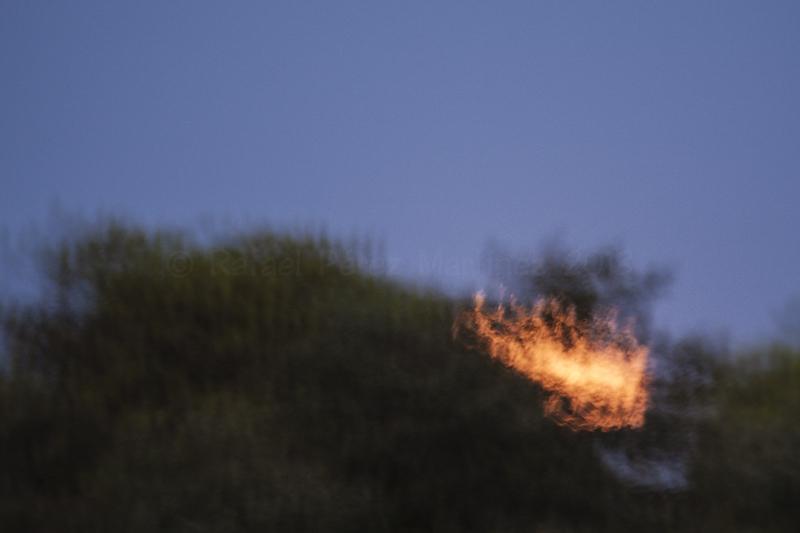 Foto fallida de la luna llena de agosto saliendo tras los árboles