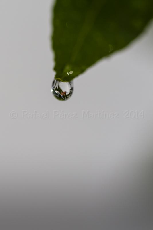 Gota de lluvia 7-12042014-_MG_2204