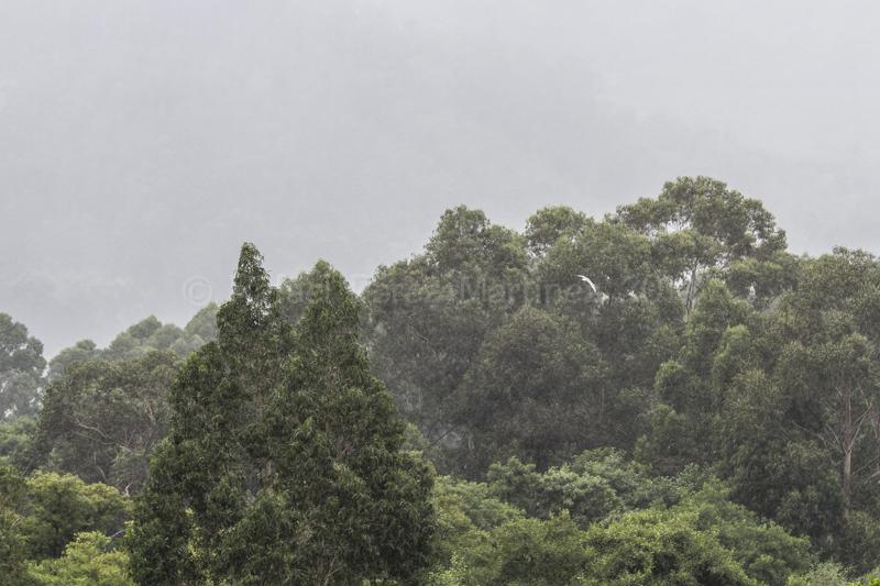 Gaviota bajo la lluvia-08082014-_MG_3683