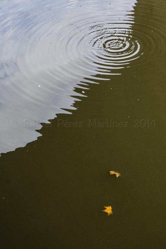 Hojas y ondas bajo el puente 1, fotos rafael pérez