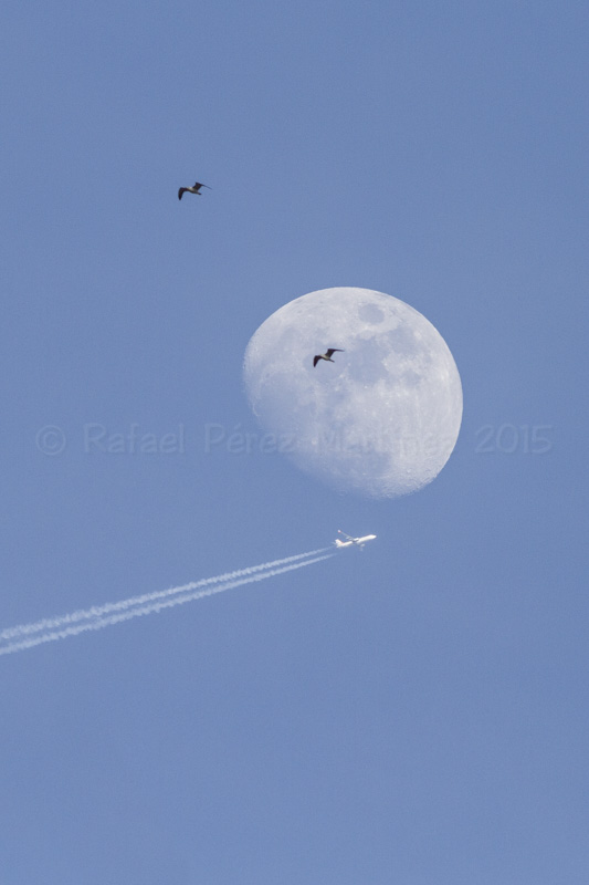 Dos gaviotas, una luna y un avión, fotos rafael pérez